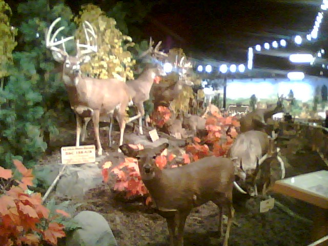 wildlife displays abound in cabelas at wheeling wv - Overly Country Christmas